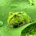 Les questions écologiques